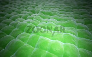 Plant tissue close-up