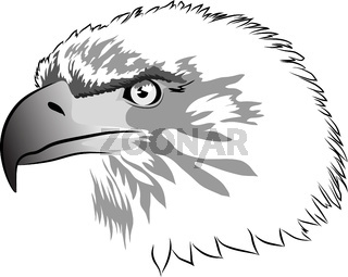 Black and gray image of an eagle head