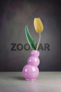 still life of tulip flower