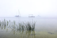Nebliger Sommermorgen am Ammersee