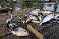 sprat catch on old wooden pier