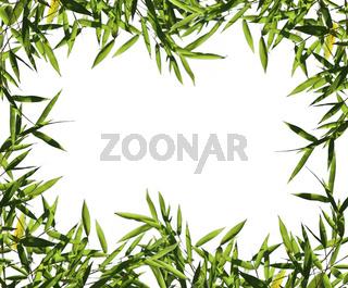 bamboo leaf background