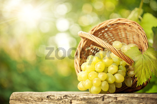 Bunch of graped and vine leaf in basket