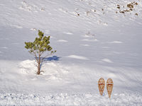 classic wooden snowshoes (Huron)