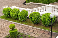 A stone staircase with a railing with balustrades descends into the garden with a well-groomed territory and neatly trimmed bushes