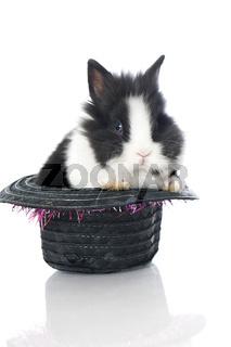 Kaninchen im Zylinder