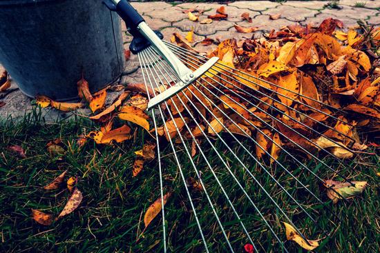 Autumn leaves in garden