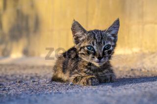 small homeless kitten