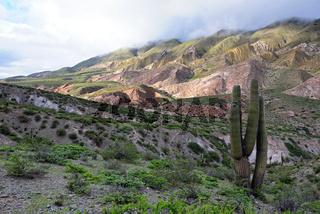 Los Cardones Nationalpark, Argentinien