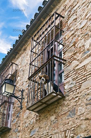 Spanischer Hund beobachtet Touristen