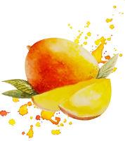 Watercolor Mango Isolated White Background