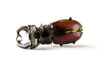 European stag beetle on white background