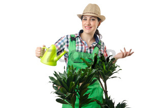 Woman watering plants on white