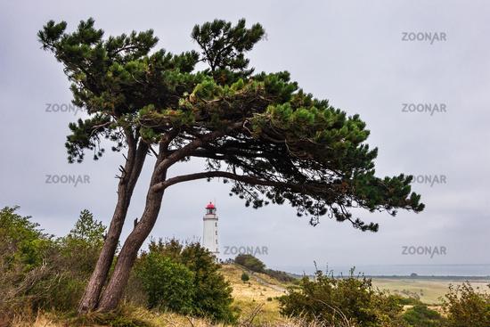 Der Leuchtturm Dornbusch auf der Insel Hiddensee