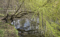 Der Baum am Teich (Greizer Park) L1004626.jpg