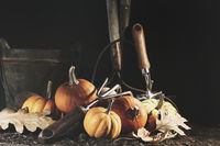 Gourds and pumpkins on the earth