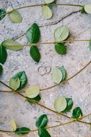 Two rings for the bride and groom on a gray texture with branches with green leaves.