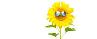 Funny sunflower with sunglasses on a white background