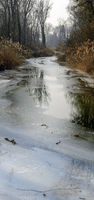 Teilweise gefrorener Wasserlauf im Auwald