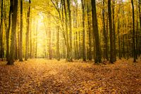 Sunlight in the autumn forest and fallen leaves