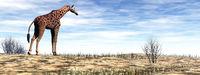 Giraffe standing in the desert - 3D render