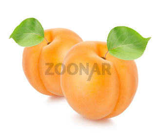 Two apricots with leaves
