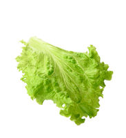 green lettuce leaf isolated on white background
