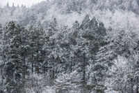 forest in the wind and snow