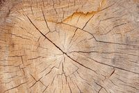 wood slice grungy background