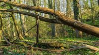 Damage in the forest after a storm in the Oefter Tal in Essen, North Rhine-Westphalia, Germany