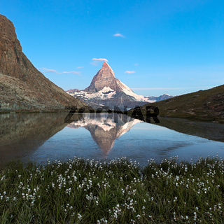Matterhorn reflecton in Riffelsee with flowers, Zermatt, Alps, Switzerland