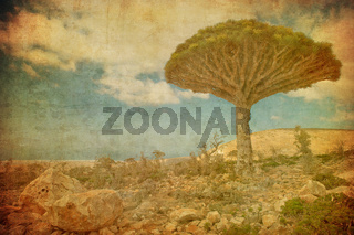Vintage image of Dragon trees at Dixam plateau, Socotra Island, Yemen