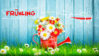 Colorful wild flower bouquet in a watering can. Concept of spring and gardening.