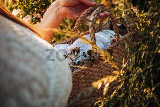 Wild rose flower on lace cloth in wicker basket