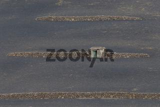 Terrassenfelder bei Haria auf Lanzarote