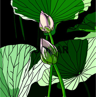Realistic Oriental lotus - a flower