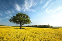 ...online_Trees_203.jpg