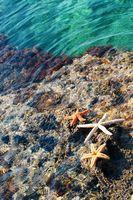 Starfish and seashells on the sunny beach. Summer holiday background
