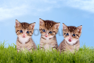 Three young kitten on a green meadow