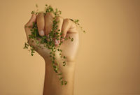 Green plant twig with leaves gripped in female hand isolated over beige wall
