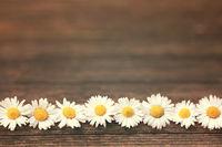 Gänseblümchen auf Holzhintergrund