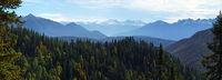 Bergwald bei Leutasch