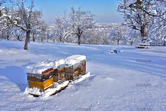 Bienenstöcke in Winterruhe in Streuobswiese