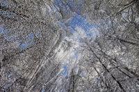 Wintereis_01.tif