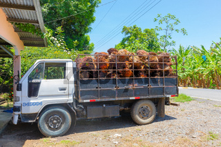Costa Rica, truck loaded with palm oil fruits