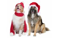 Two cute christmas dogs