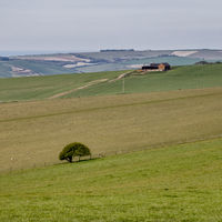 SOUTH DOWNS, EAST SUSSEX, UK - MAY 3 : Lone tree on the undulating South Downs in Sussex on May 3, 2021