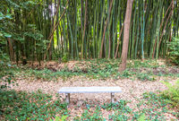 Bamboo botanical garden. Concept for zen, environment and green life.