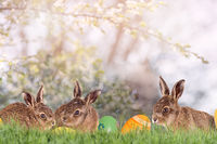 Three little Easter bunnies with Easter eggs on a green meadow
