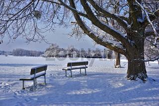 Sitzbänke unterm Lindenbaum in winterlicher Landschaft